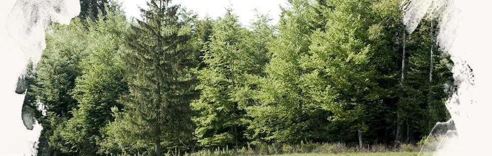 L'orée d'une forêt d'épicéa à Frasne, un endroit idéal pour placer sa ou ses ruches